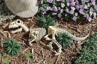 WeirdGardenRaptorSkeleton.jpg