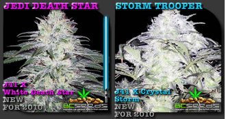 20 psychedelic strains of Star Wars-themed marijuana