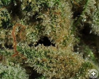 20 psychedelic strains of Star Wars-themed marijuana