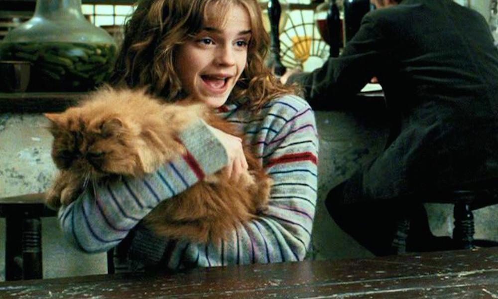 hermione-crookshanks-cat.jpg