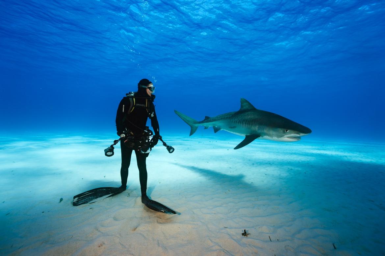 SharksUnderAttack_001_MissionCritical.jpg