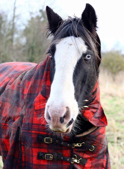 WynonnaEarp_horse.jpeg