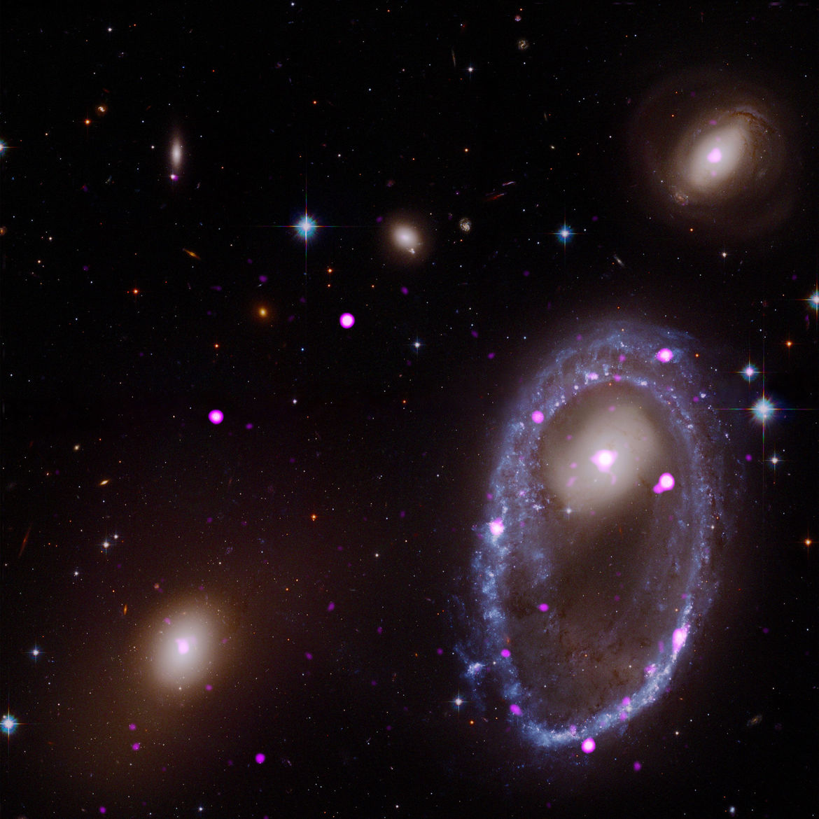 X-ray (purple) and optical (red/green/blue) composite image of AM 0644-071, showing the ring galaxy and the locations of black holes and neutron stars. Credit: X-ray: NASA/CXC/INAF/A. Wolter et al; Optical: NASA/STScI
