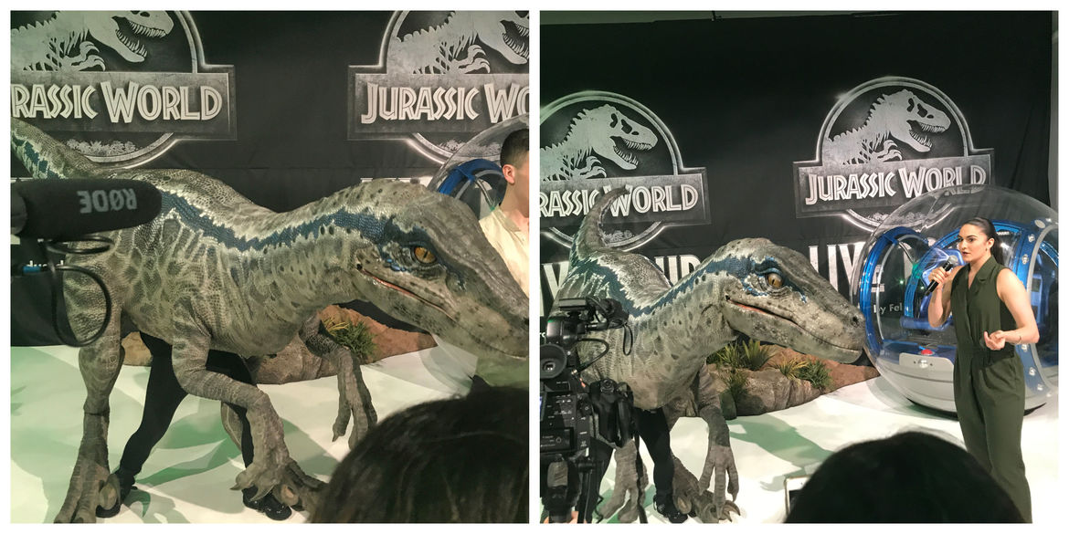 Blue at Jurassic World Live event