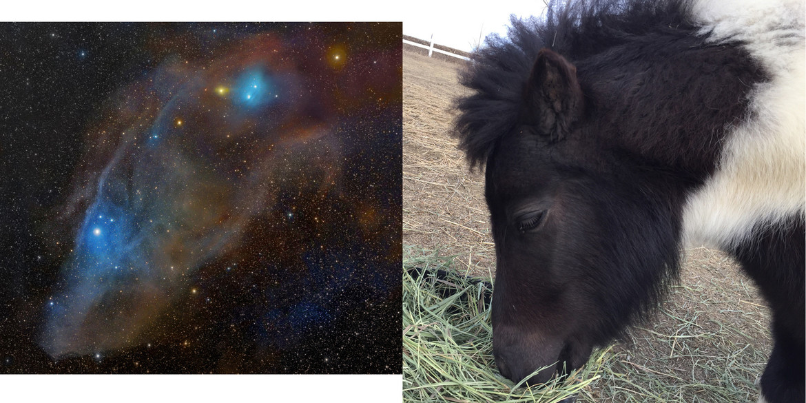 IC 4592, the Blue Horsehead Nebula, and Tiny Elvis, a brown and white horse's head. Credit: Rogelio Bernal Andreo and Phil Plait