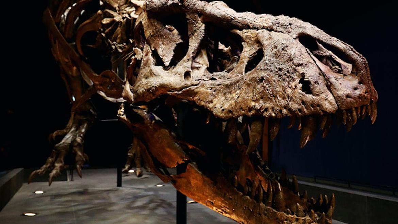 dinosaur_extinct.png