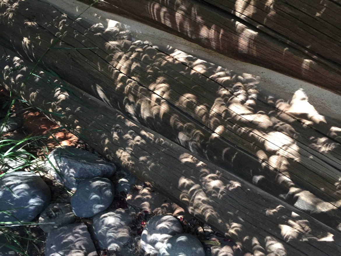 eclipse seen through leaves