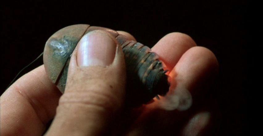 Cockroach_Bug_1975