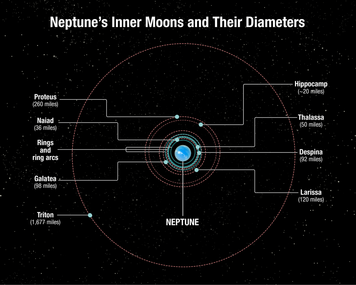 The orbits and sizes of Neptune's moons, including its ring arcs. The orbits of Proteus and Hippocamp are extremely close. Credit: NASA, ESA, and A. Feild (STScI)