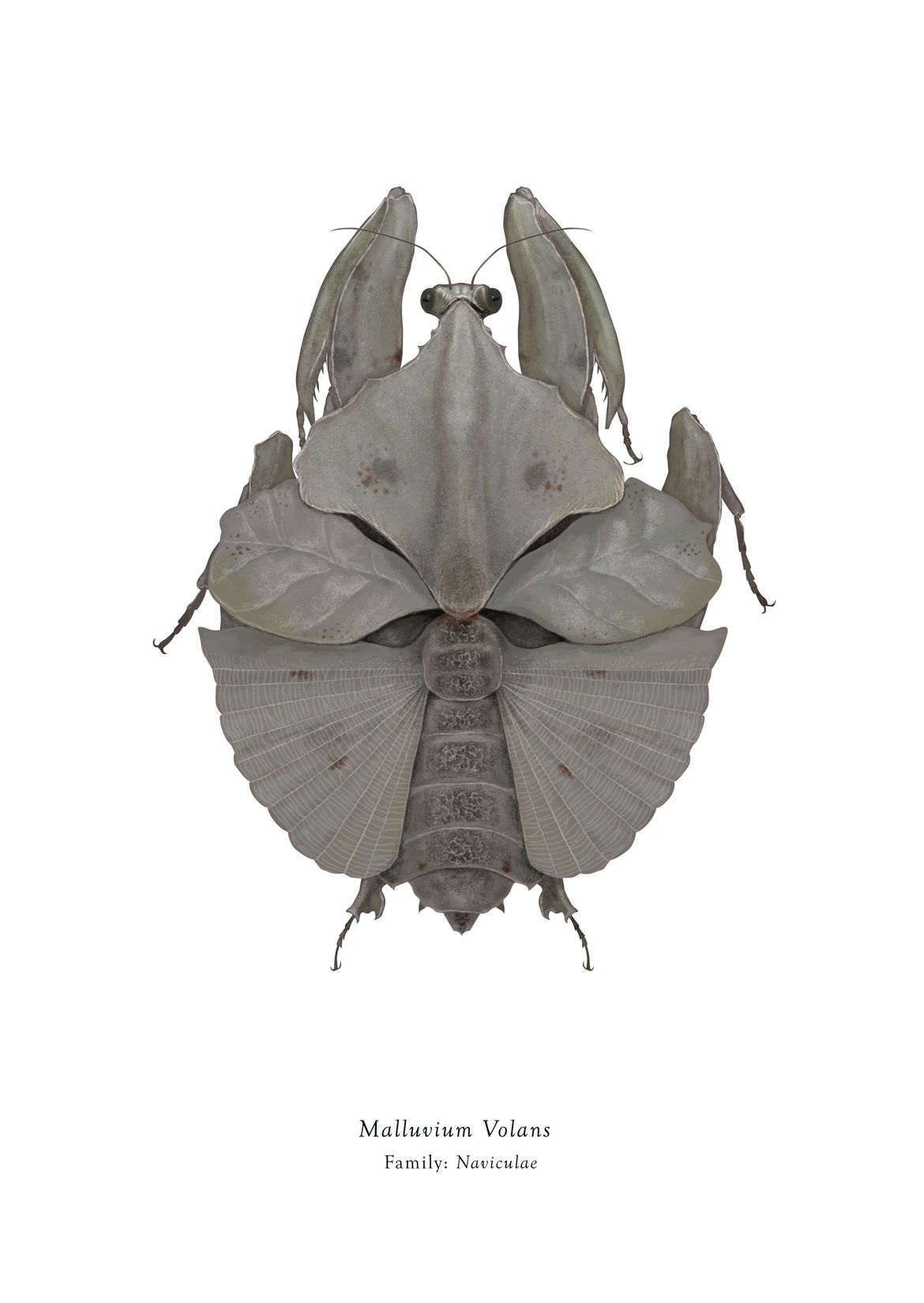 Star Wars characters reimagined as insects