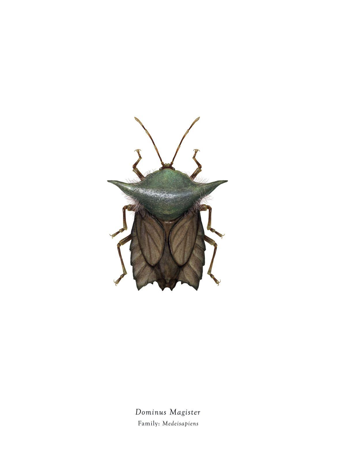richard wilkinson star wars bugs yoda