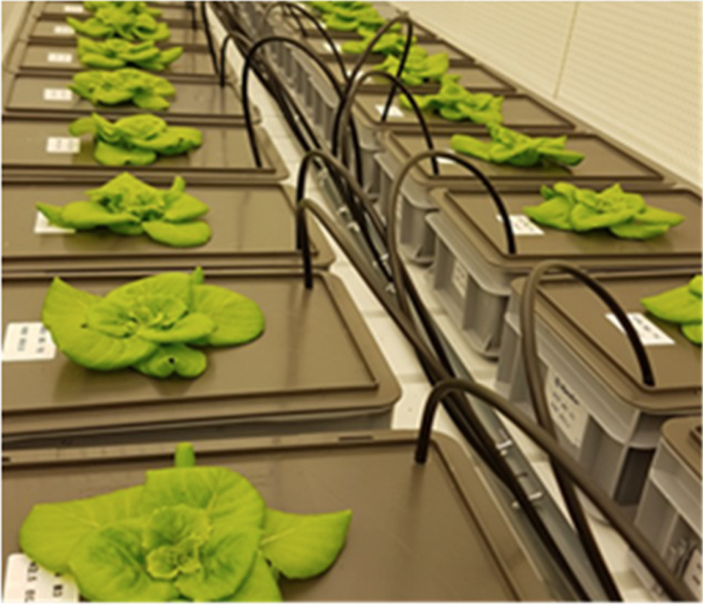experiment for farming on Mars