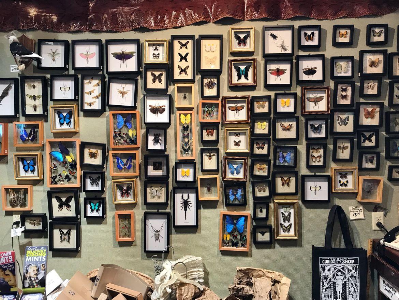Seattle's Ye Olde Curiosity Shop bugs