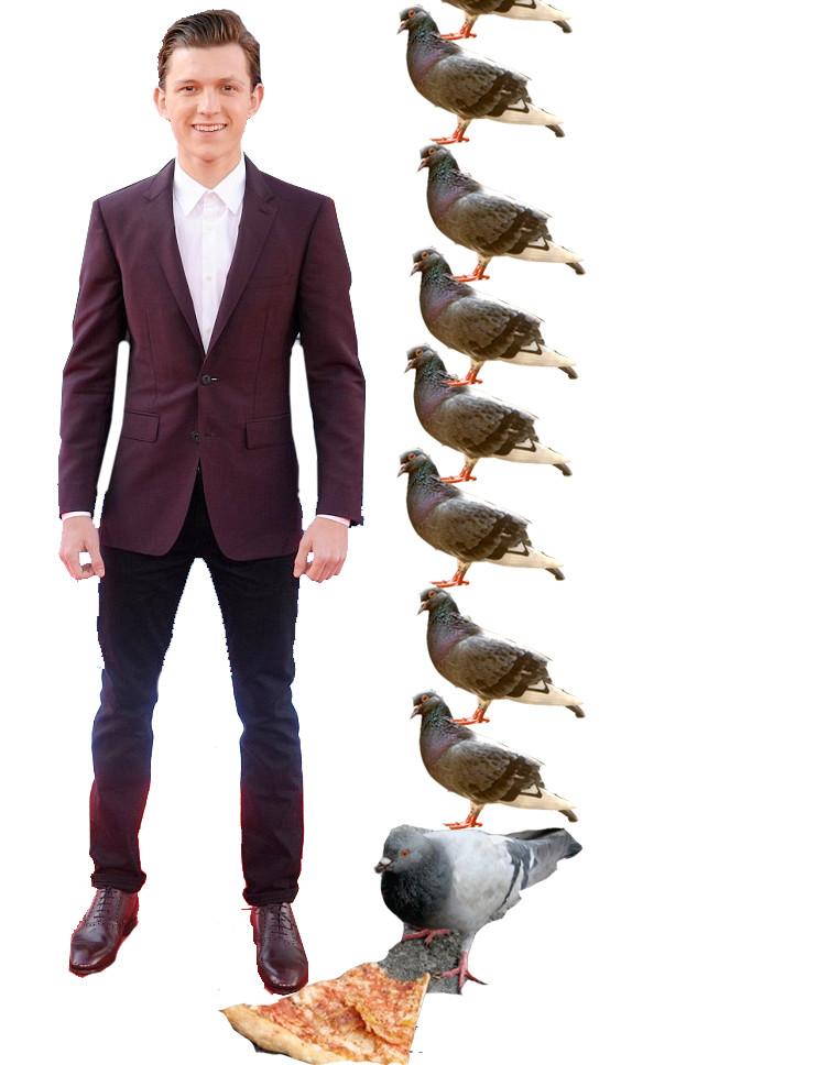 tom and pigeons.jpg