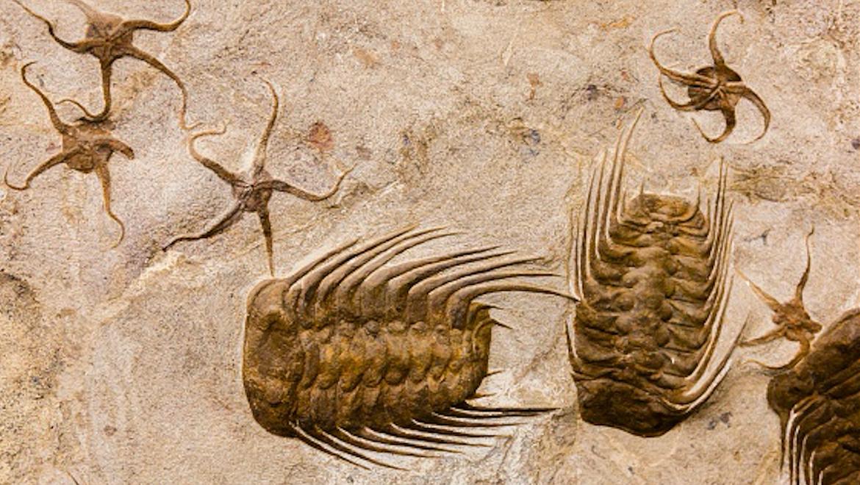 trilobites.png