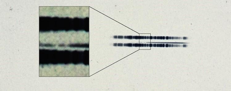 vanmaanen_star_original_spectrum.jpg