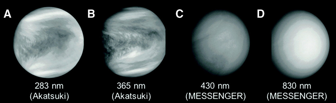 Images of clouds on Venus in ultraviolet (A; Akatsuki probe), near-UV (B; Akatsuki), blue (C; Mercury MESSENGER probe) and near infrared (D; MESSENGER). The stripes in C and D are instrument artifacts and not real. Credit: Limaye et al.