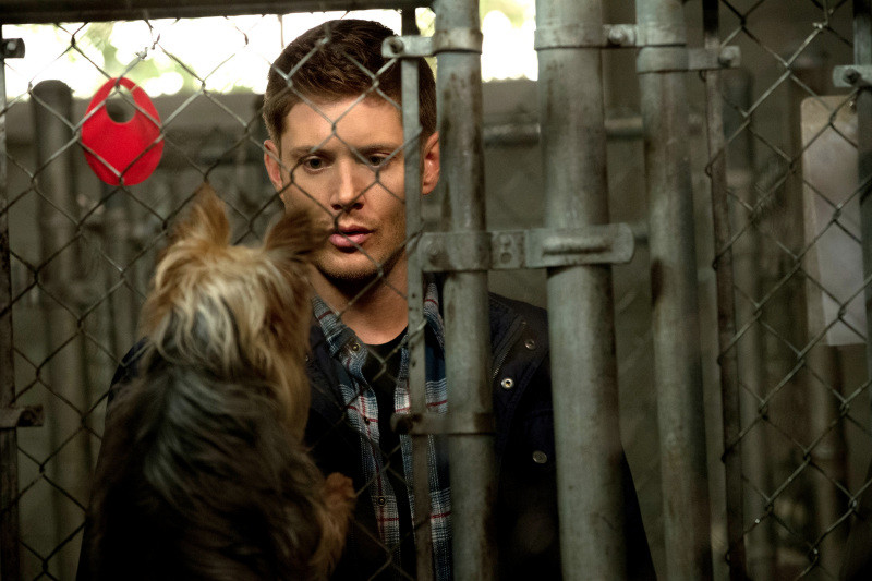 11-13 Supernatural.jpg