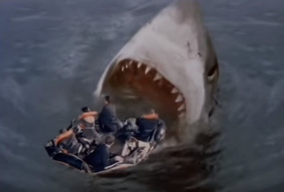 11_raft_shark.jpg