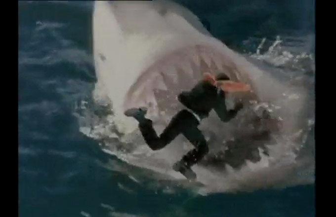 11_shark_attack.jpg