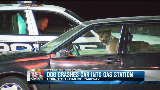 Dog_crashes_into_gas_station.jpg