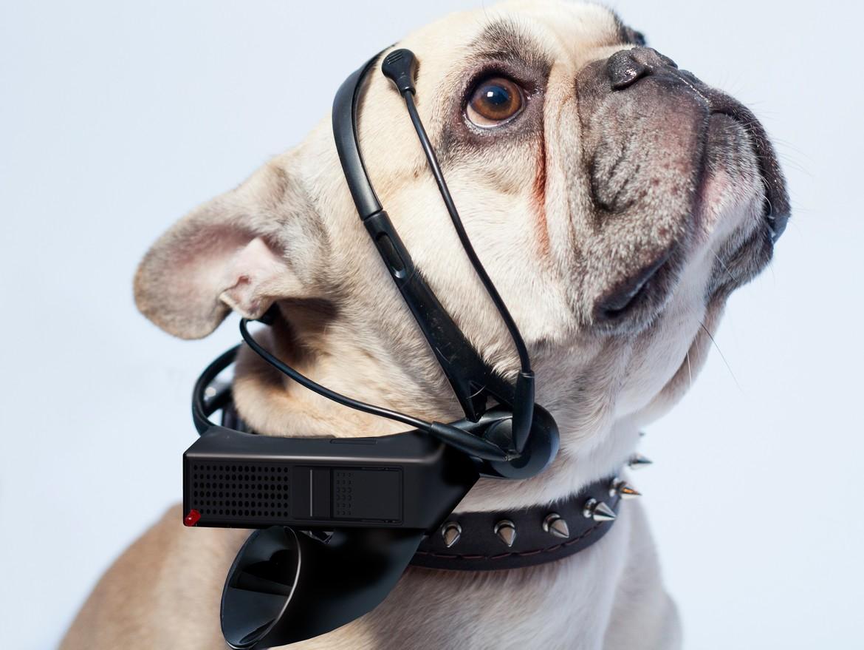 Dog_mind_reader.jpg