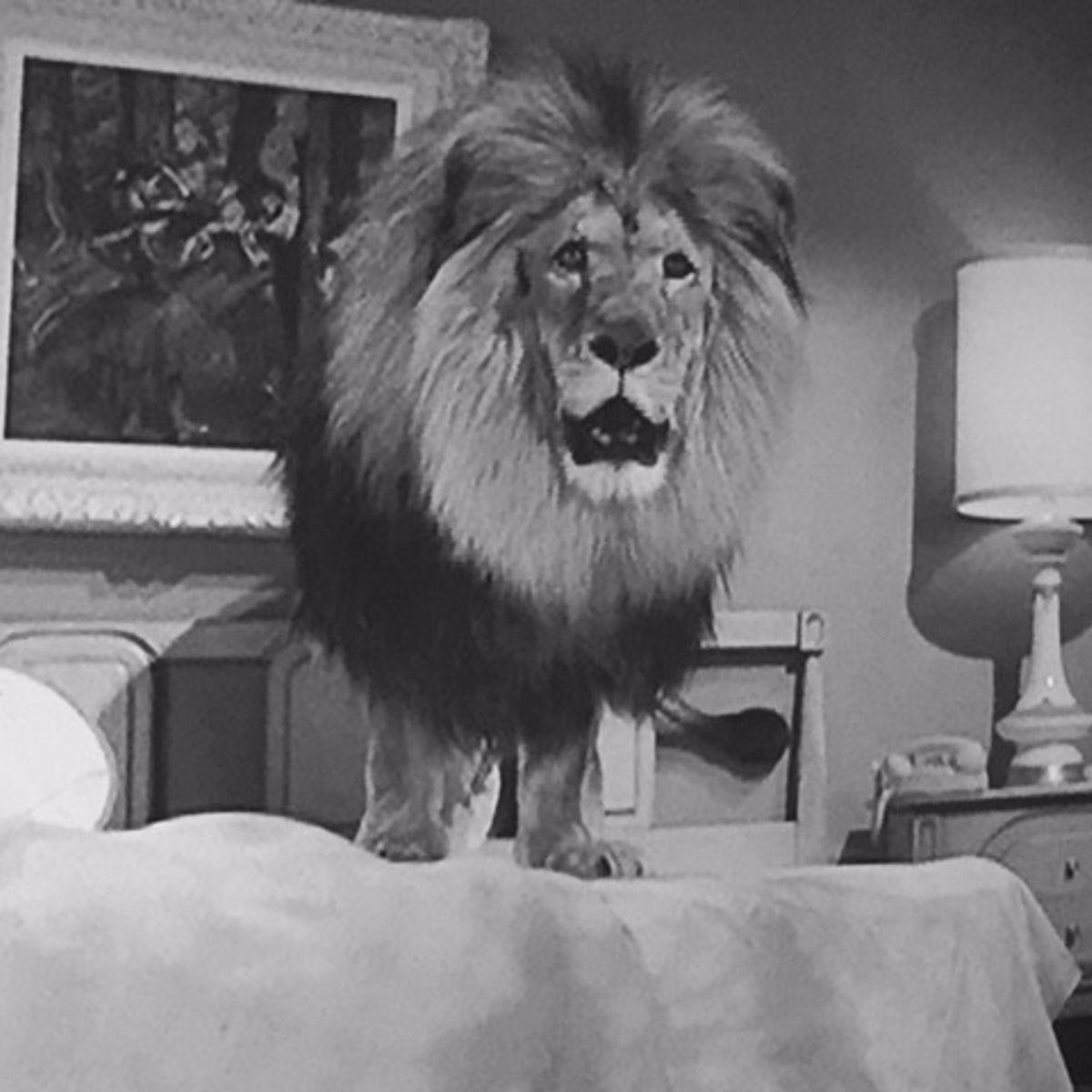 jungle-lionhero.jpg