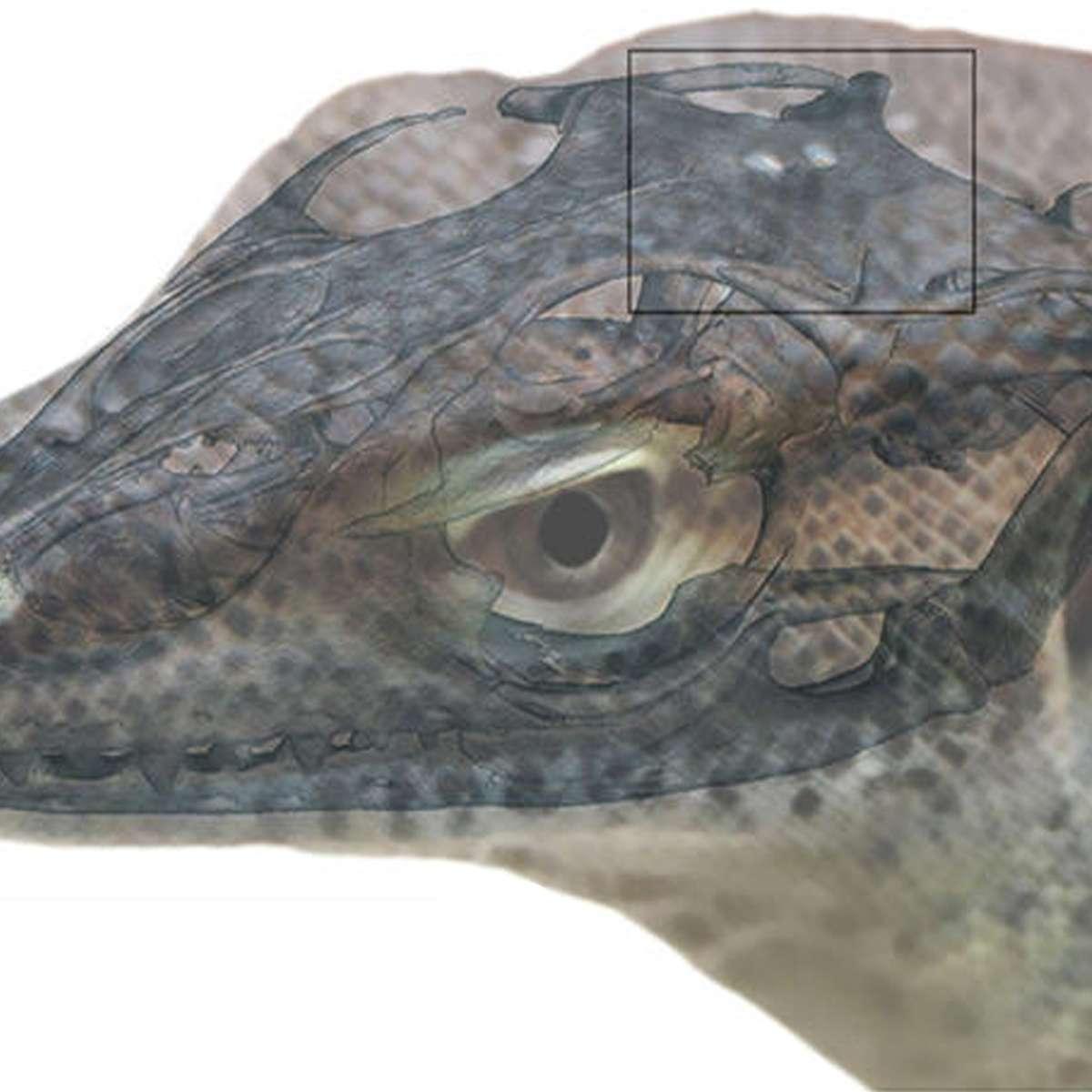 four-eyed prehistoric lizard