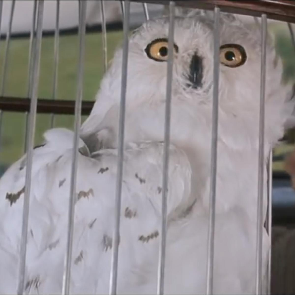 Harry Potter scene with Harry, Ron and Hedwig
