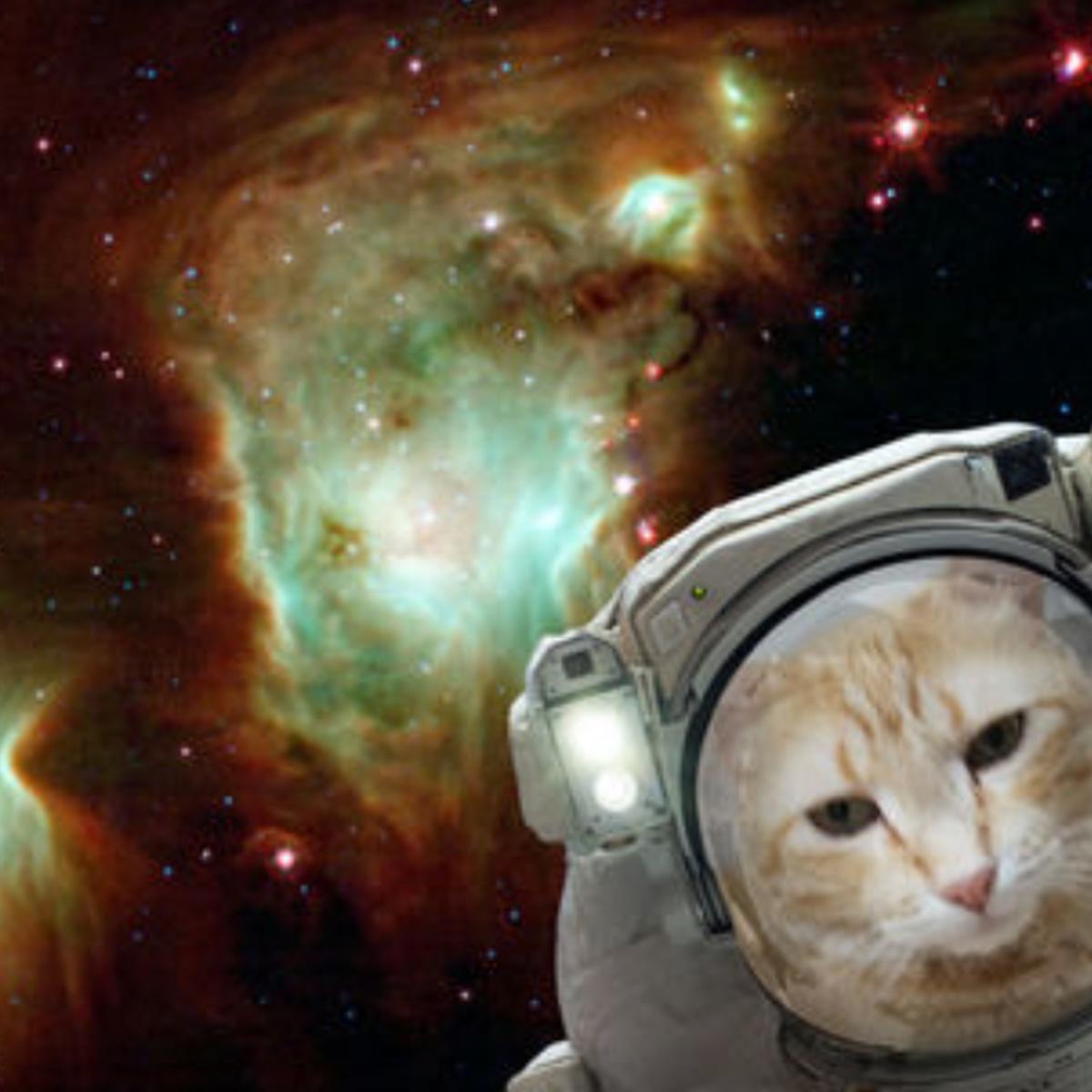 NASA space selfie app