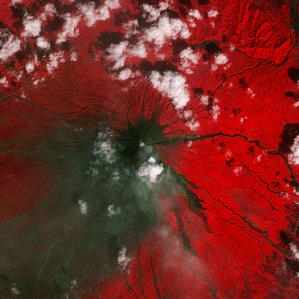 Infrared observations of the Mayon volcano by the Copernicus satellite shows vegetation (red) and the damage done by the latest eruption of lava (green/brown).  Credit: ESA