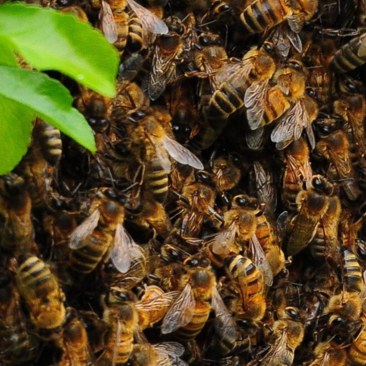 Bee_Kindness.jpg