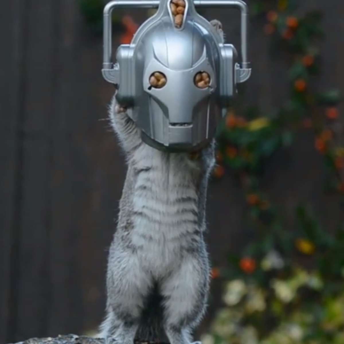 CybermanSquirrel.png