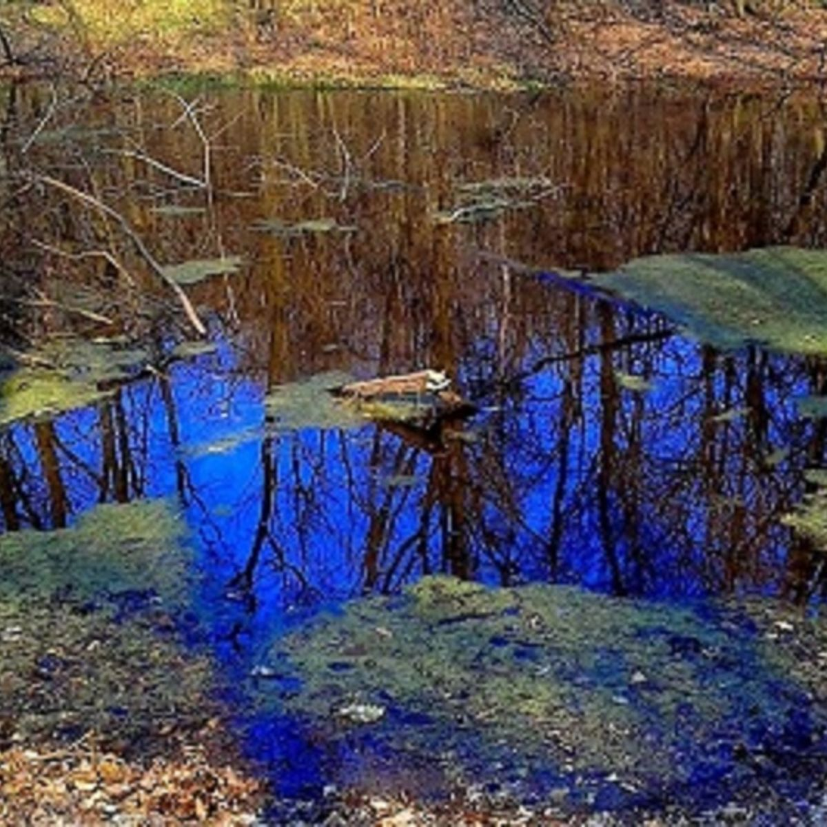 Giant_puddle.jpg