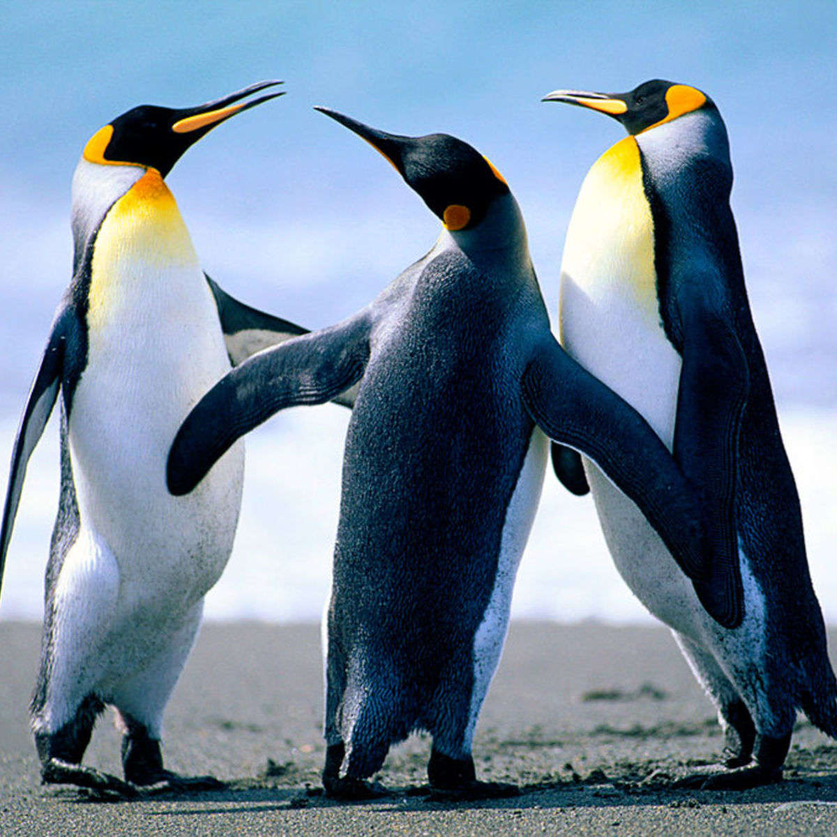 Penguins_1.jpg