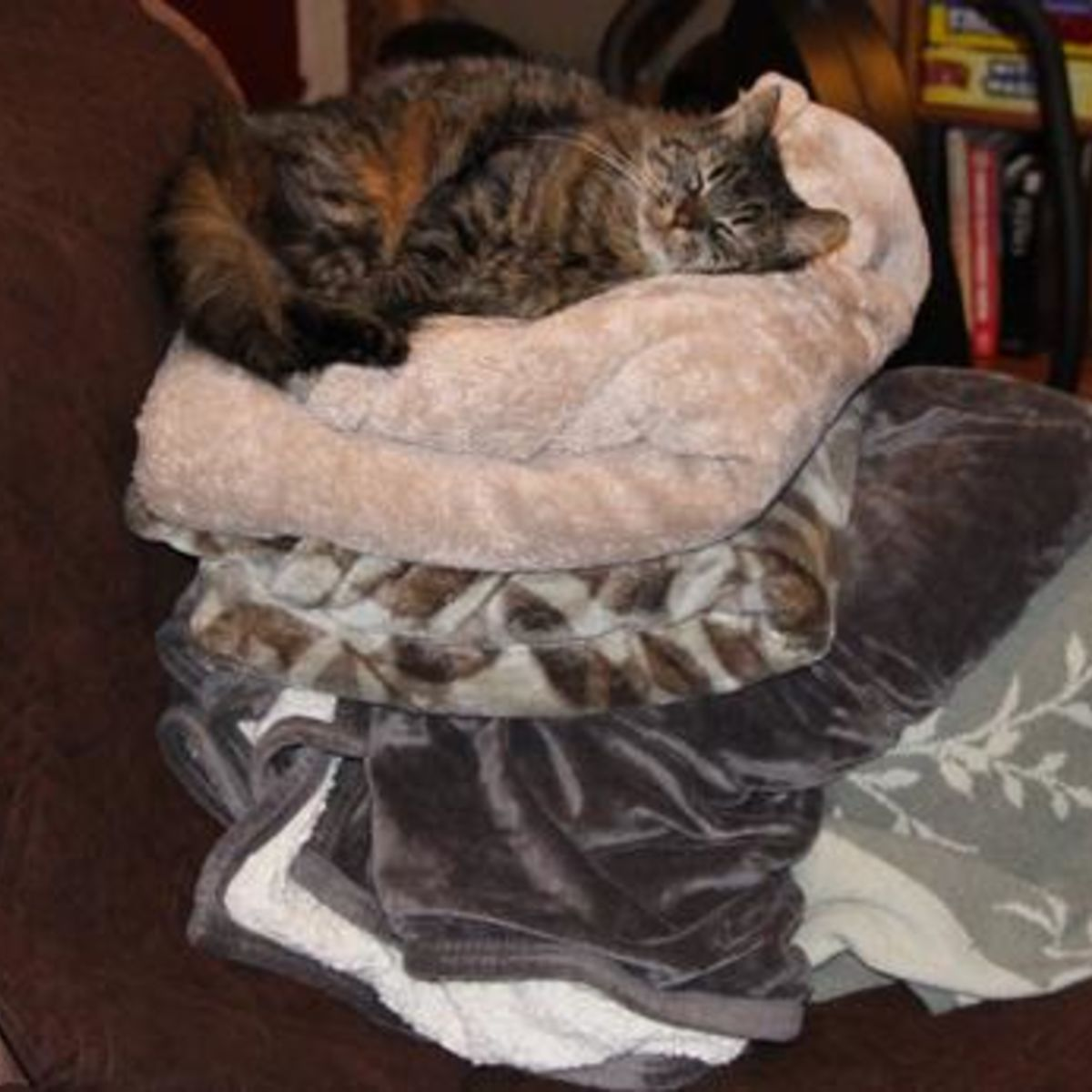 caturday_blankets.jpg.CROP.rectangle-large.jpg