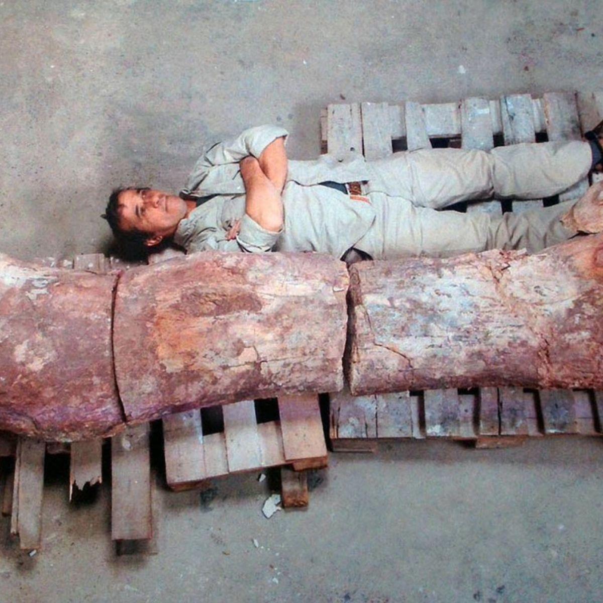 dinosaurfossil.jpg