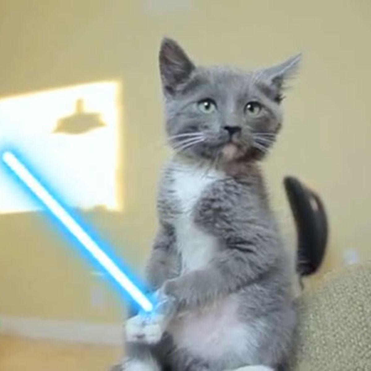 KittenLightsaber082811.jpg