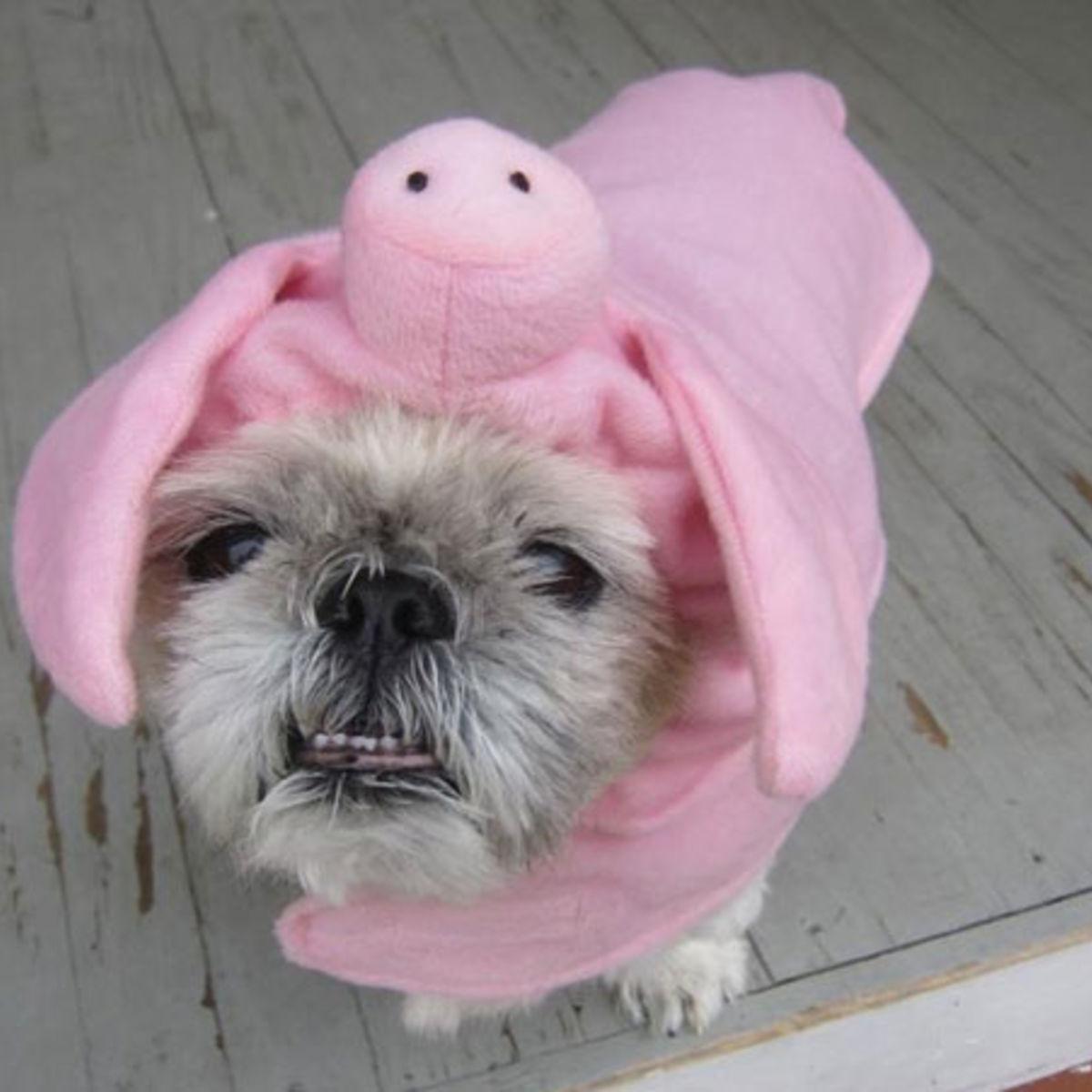 PigDog030512.jpg