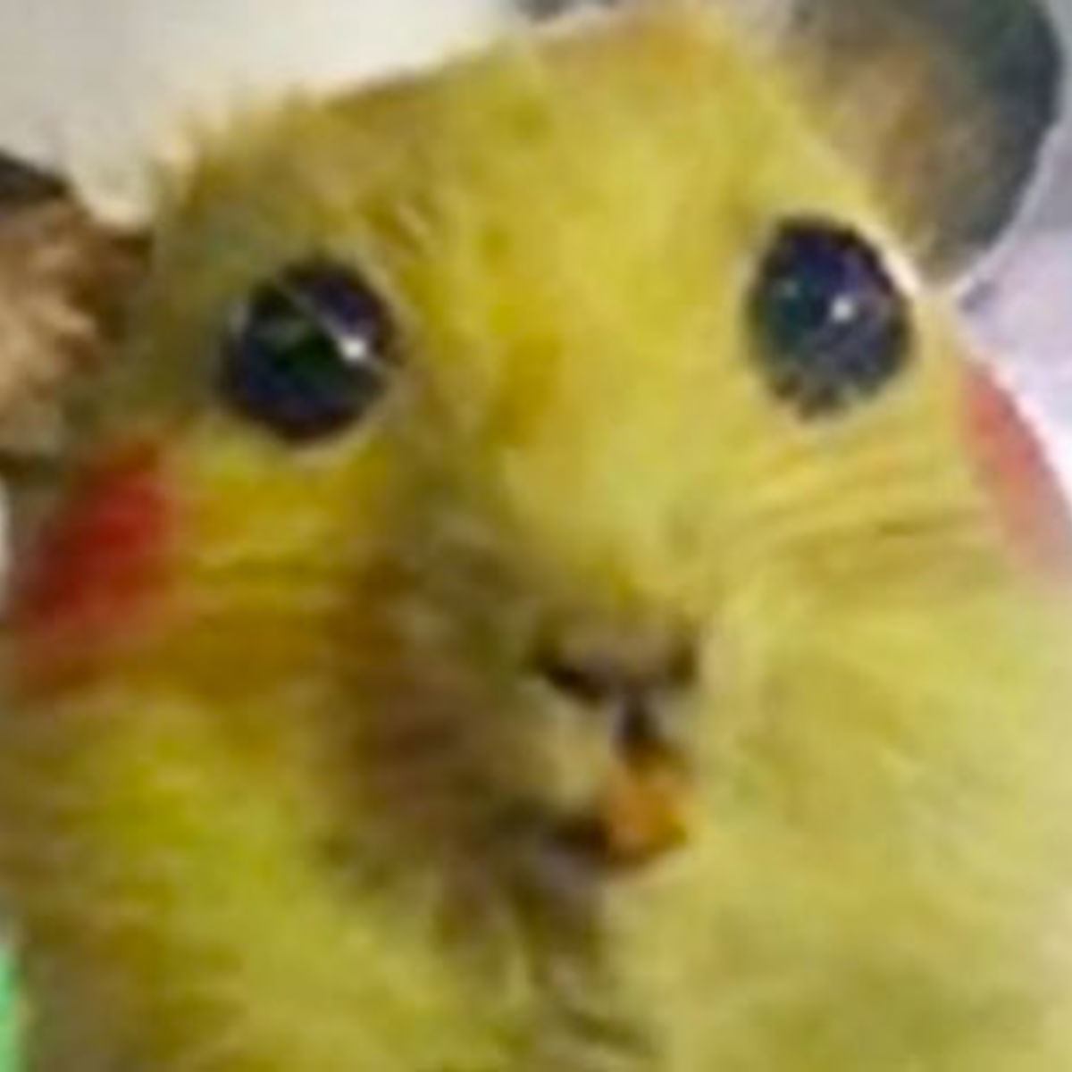 Pikachus1025111.jpg