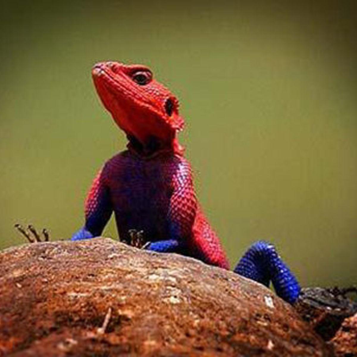 spider_Man_lizard.jpg