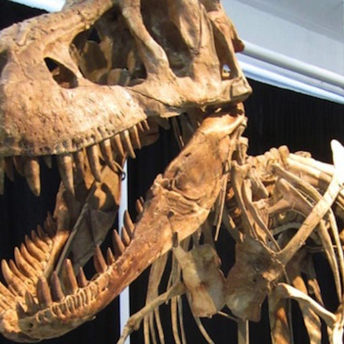 tyrannosaurus-bataar-skeleton.jpg