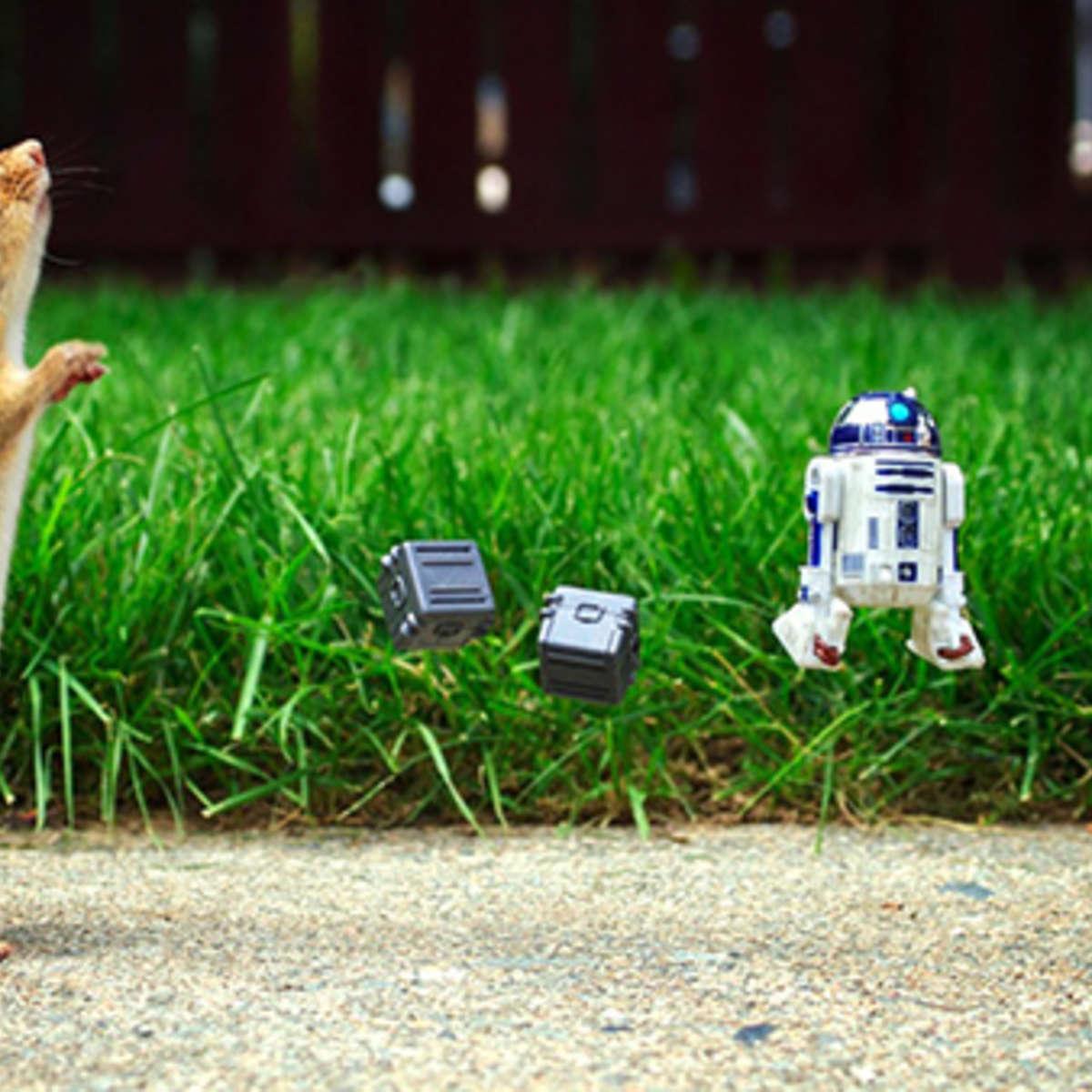 star-wars-chipmunk-4_0.jpg