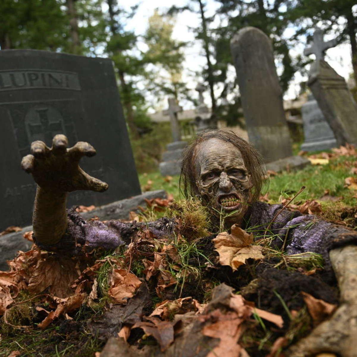 DAY OF THE DEAD 101 Still
