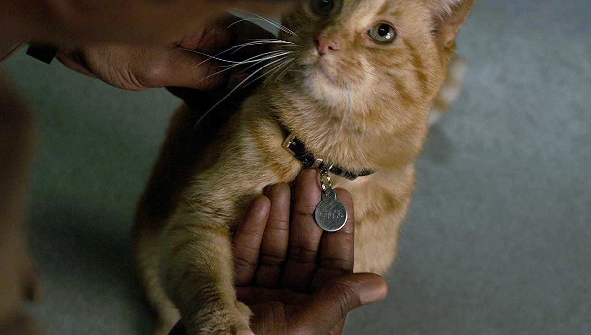 captain marvel's cat goose continues to steal spotlight with
