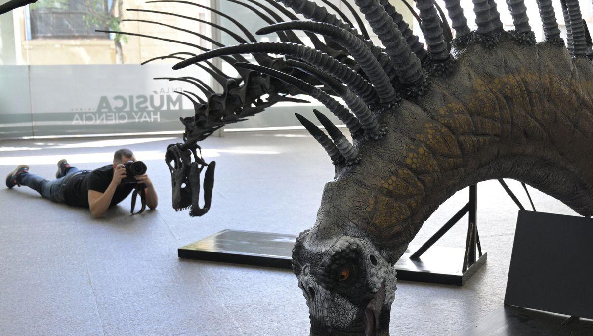 Bajadasaurus pronuspinax