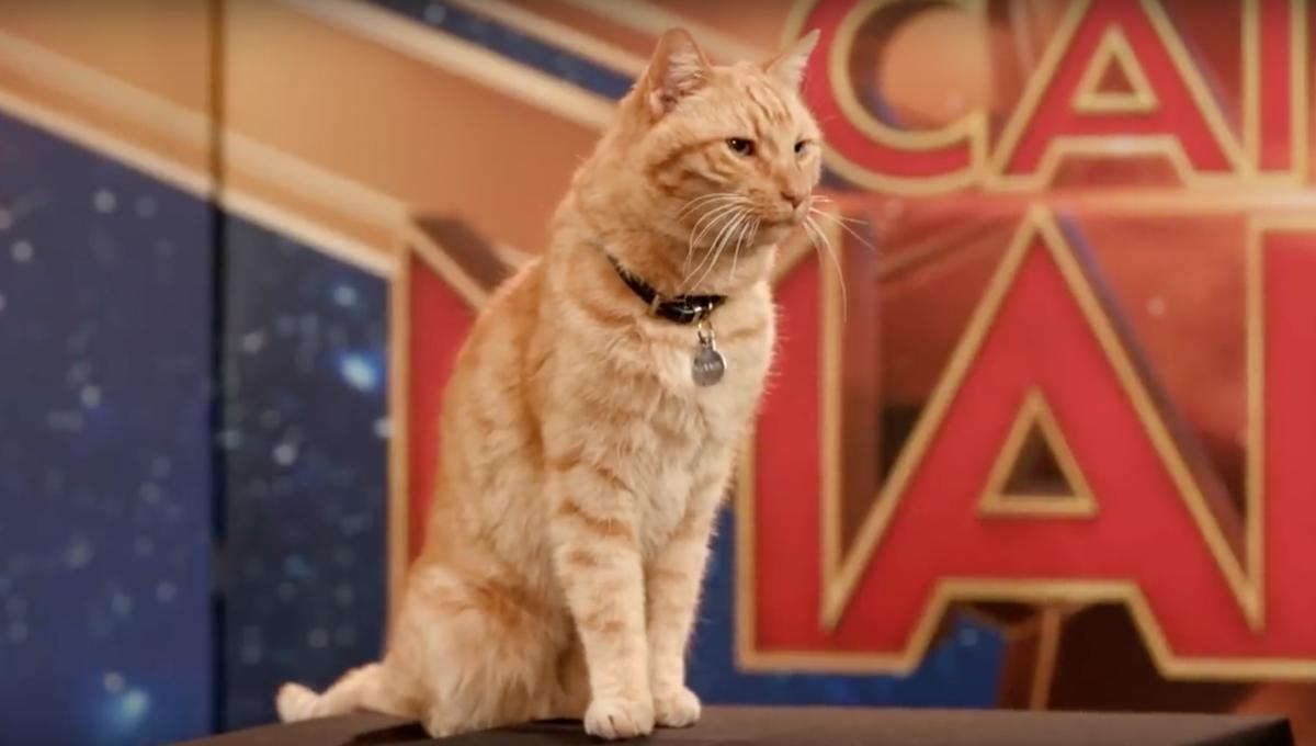 Goose the cat from Captain Marvel
