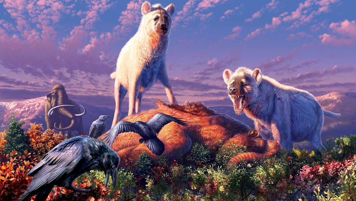 The Ancient Hyenas Chasmaporthetes Would Ve Dwarfed A Game