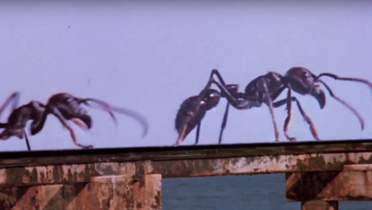 Something is turning ants into zombies, and it's worse than a horror