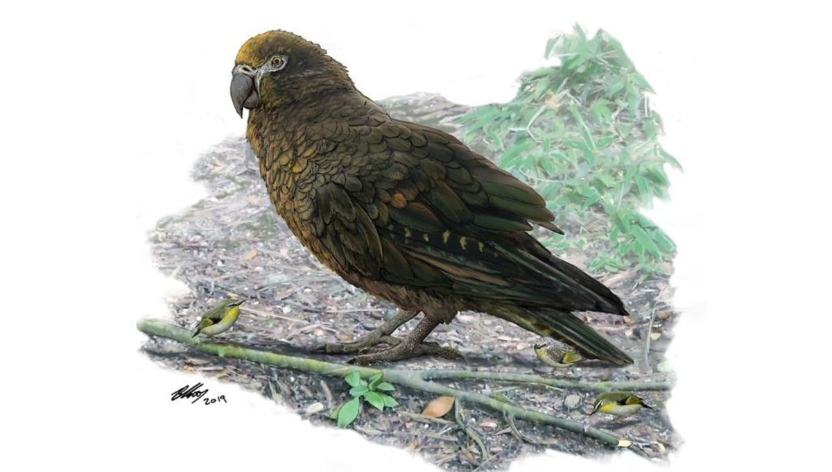 This giant prehistoric parrot might have munched on massive crackers